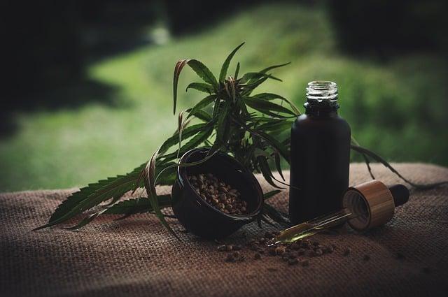plantes de cbd